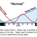 Во сколько укладывать ребёнка спать на ночь?